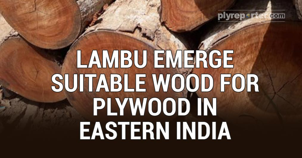 20200925033204_Lambu-Emerge-Suitable-Wood.jpg