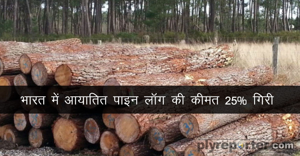 Imported-Pine-Logs-Price-Drops-by-HINDI (1).jpg