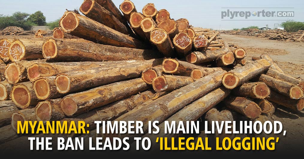 MYANMARTimber-Is-Main-Livelihood.jpg