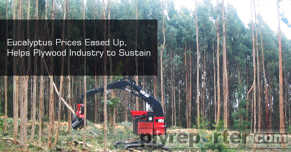 Growing Poplar timber prices have been worrying plywood industry in northern India, but the easing up prices of Eucalyptus timber is helping industry to sustain.