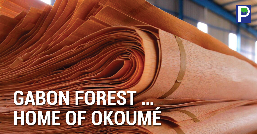Commercial forest harvesting in Gabon began as early as 1892, but only in 1913 was Okoumé, Gabon's most valuable wood, introduced to the international market. Gabon supplies 90% of the world's Okoumé, known worldwide for the production of veneer & pl