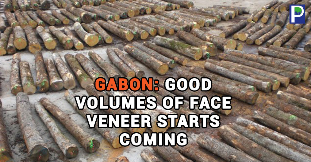 According to latest report gathered by The Ply Reporter, there are more than 50 peeling machines in operational state in Gabon now being operated by a dozen of Indian entrepreneurs.