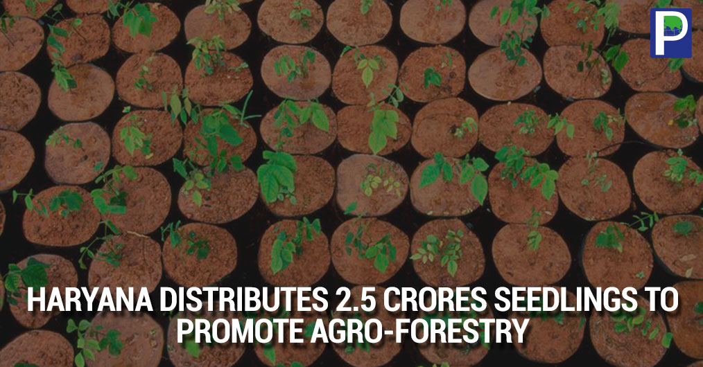 In an initiative to increase green cover and support farmers and promotes timber based industry at greater level in the state of Haryana, the Forest Department has decided to sell tree saplings at subsidized .