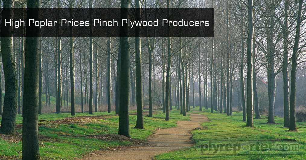 High-Poplar-Prices-Pinch-Plywood-Producers.jpg