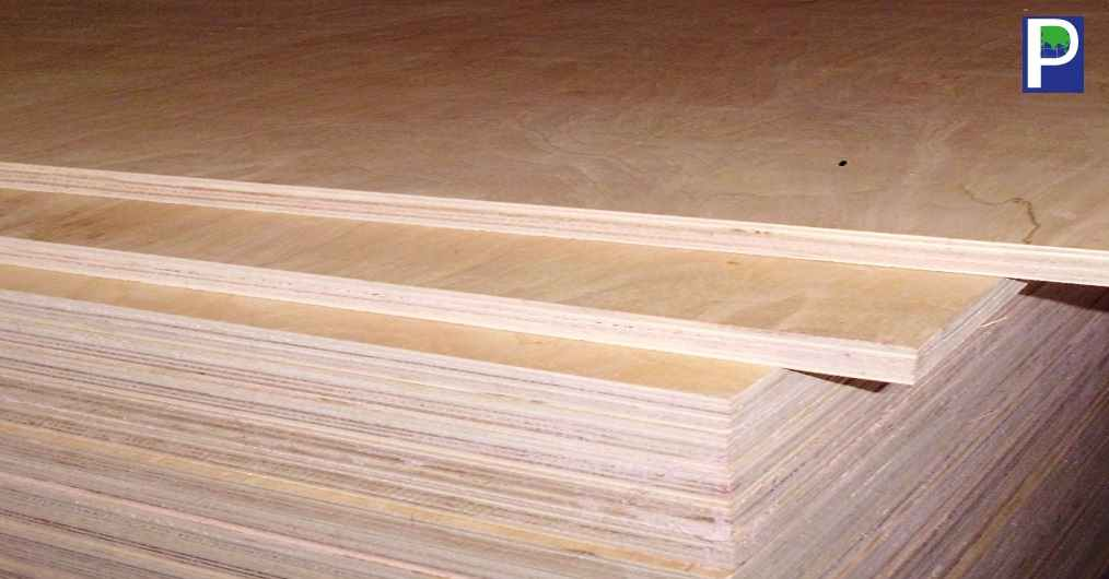 The abundance of Poplar plantation in Northern India offered an opportunity for plywood manufacturers to produce all core Poplar plywood during last 4 years. At the same time, the plantation supplies also helped the growers, consumers and the markets