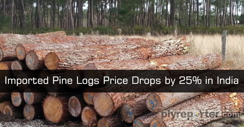 Amidst chaos and rising pressure, there is good news coming from Pine timber availability side. The Pine log prices have reported to be dropped to 25% in India.