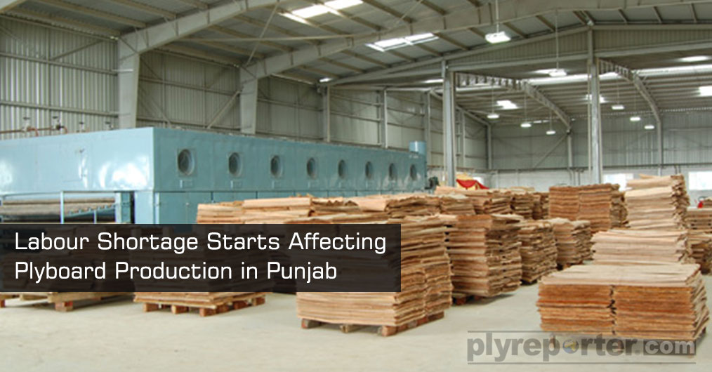 The effect of crop harvesting season, general election and marriages has begun impacting the availability of labour in plywood industry in Punjab.
