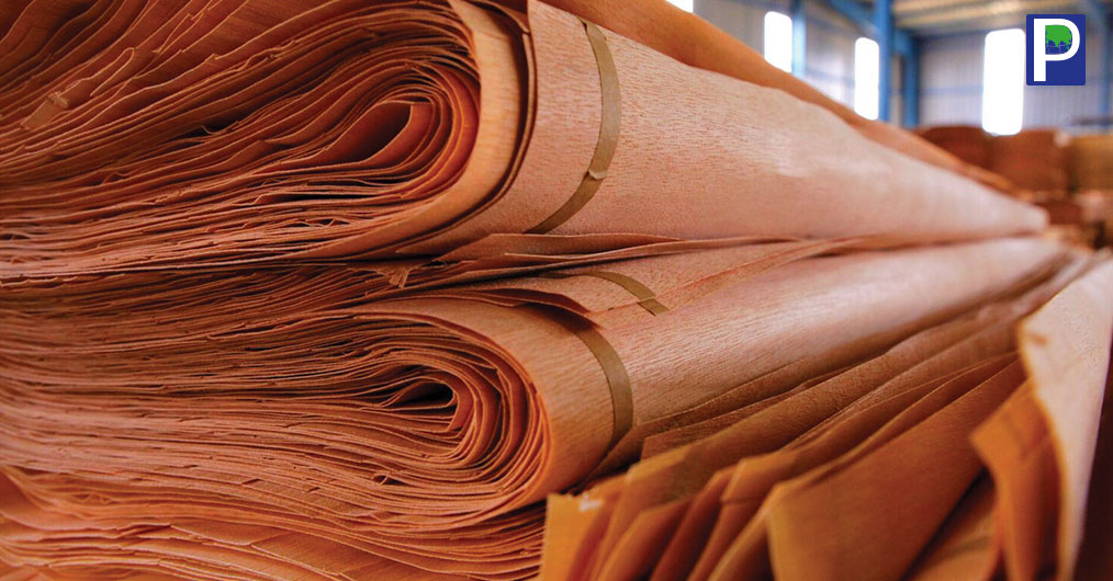 With reducing supply of Gurjan face veneer, Okoumé with sustainable supply is emerging as perfect replacement of face veneer for Plywood manufacturing in India