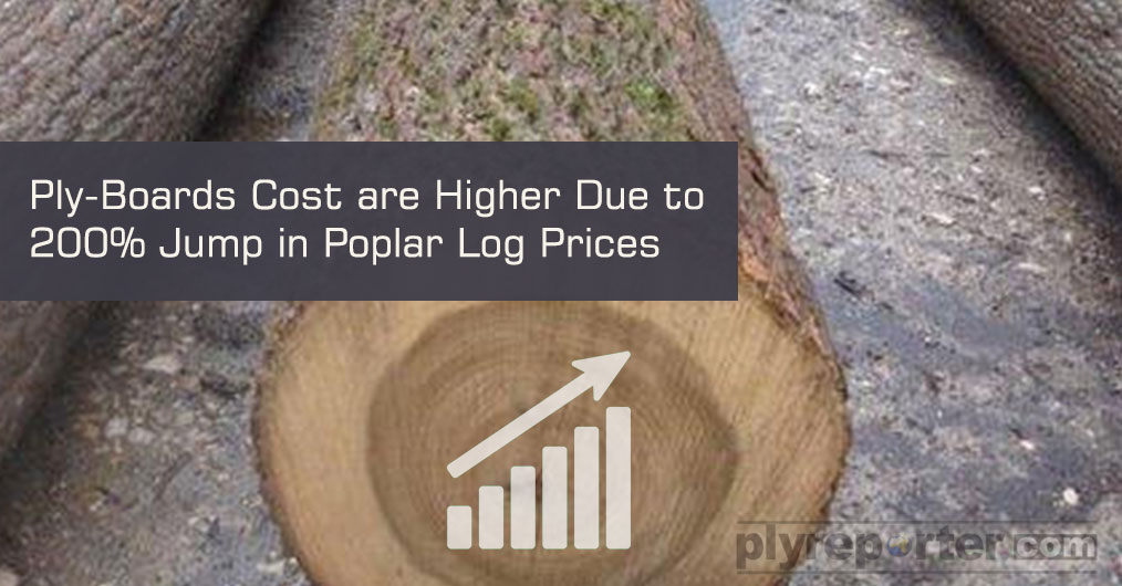 As predicted by Ply Reporter's the Poplar Timber prices have been rising with spiral effect every day in north India