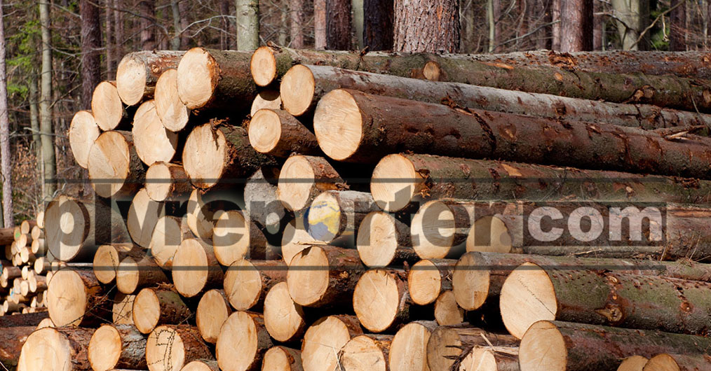 The Myanmar government is exploring an opportunity to lift the ban on export of logs from private plantation.