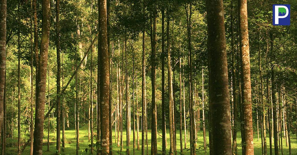 Sabah-Imposes-Logs-Export-Ban.jpg