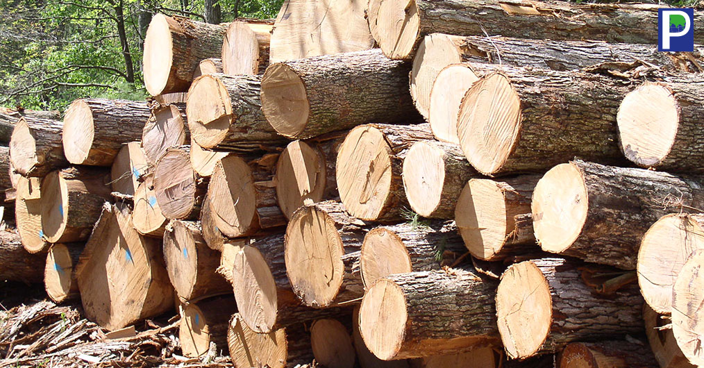 Timber-Prices-It-Rise-Beyond.jpg