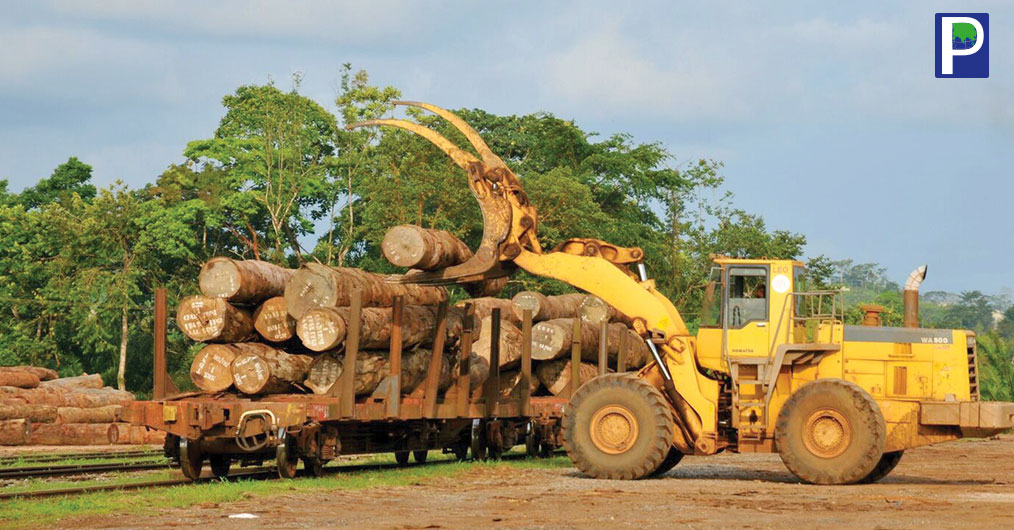 After logging ban in Myanmar, Laos and restricted log felling min Malaysia, Indonesia and other tropical timber exporting countries, Okoumé is vital wood specie