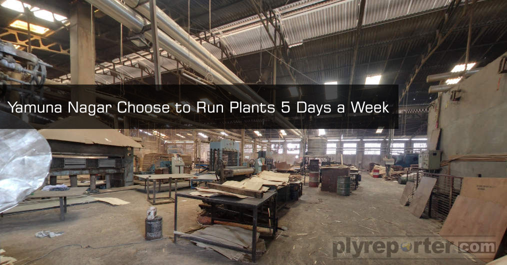 Plywood factories at Yamuna Nagar have opted to reduce production hours due to ongoing timber shortage and rising workers shortage issues.