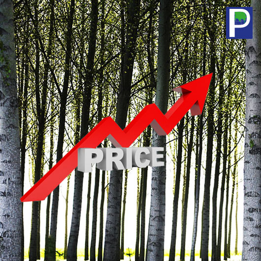 Poplar Prices Pain Again, Racing Upward